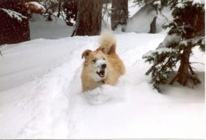snowy nose puppy
